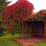 Пергола - тенистый уголок в саду