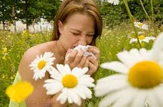 allergiya %название