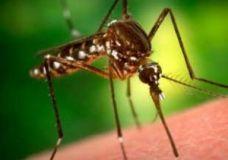 """""""Скорая помощь"""" при укусах насекомых для детей и родителей"""