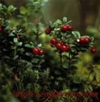 Лечебные травы: Боярышник, Брусника, Бузина черная