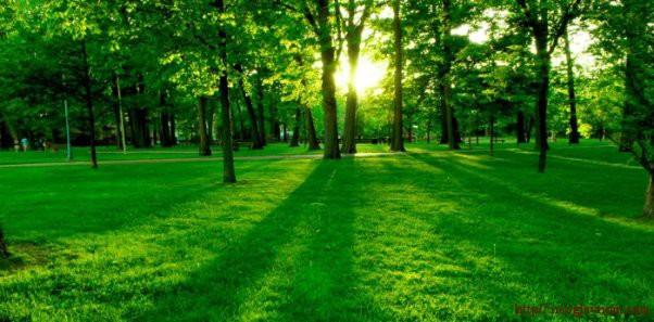 Лечебные свойства деревьев