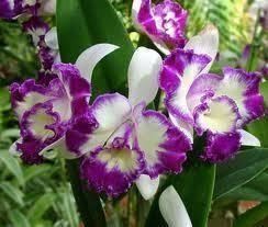 Ароматы здоровья: Можжевельник, Мускус, Опиум, Орхидея