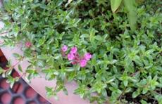 Полезные растения с подоконника.