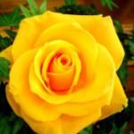 Цветотерапия - лечебная магия