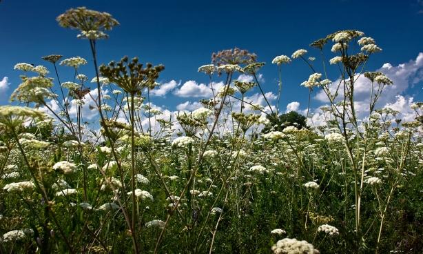 Собираем лечебные травы в июле