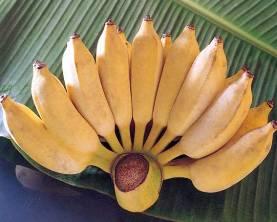 Полезные факты о бананах (рисовый банан)
