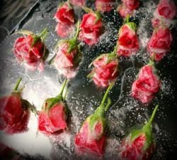 Цветы - красивая пища. Роза