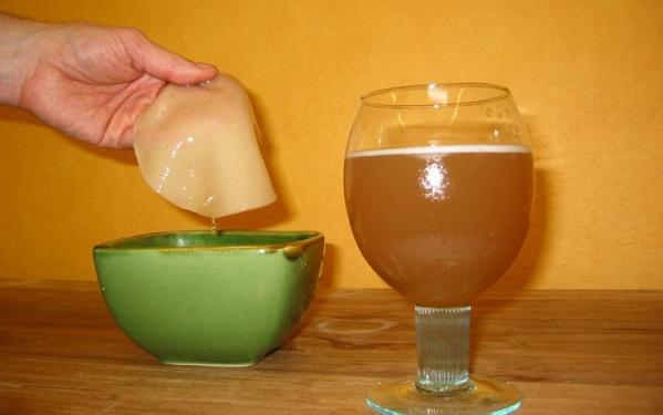 Чайный гриб: приготовление и уход.