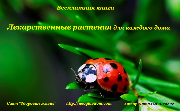Лекарственные растения для каждого дома