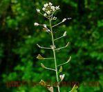 Съедобные растения от весеннего авитаминоза.