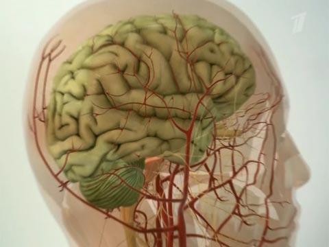 Очищение сосудов головного мозга.