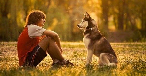 Собака и здоровье человека